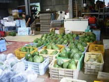 Melon_015