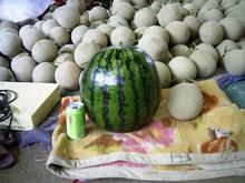 Melon_016