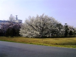 Niigata_001