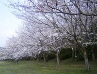 Niigata_012