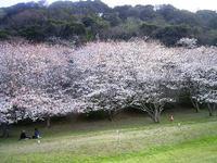 Niigata_019