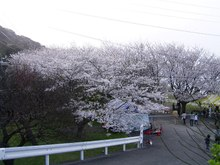 Sakura2_018