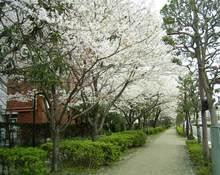 Sakura2_020_1