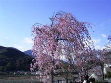 Shimobe_030_2